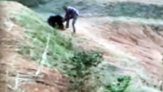 India: voleva farsi un selfie con un orso, sbranato