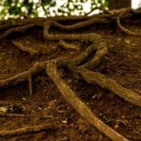 Il linguaggio sotterraneo delle piante: così comunicano tramite le radici