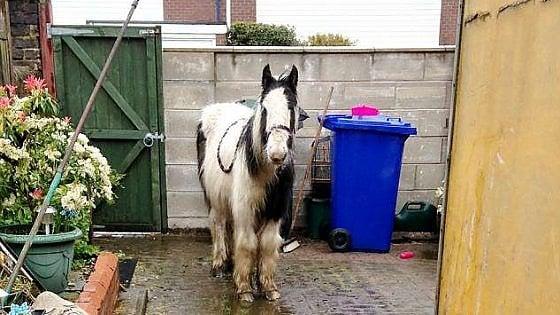 Donna inglese si ritrova a sorpresa un pony (maltrattato) nel cortile