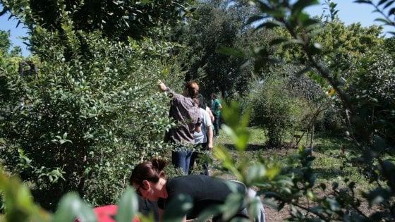 Tornano campi estivi Legambiente, tutela 'verde' e sociale