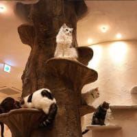 Il villaggio dei gatti a Tokyo, dove tutto è a misura di micio