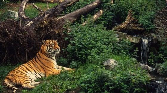 """Wwf: """"7mila specie a rischio estinzione"""". Tutti i numeri del bracconaggio"""