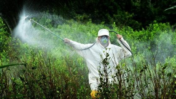 ''Il glifosato provoca anomalie nei nascituri'', nuovo studio pilota sugli effetti del pesticida