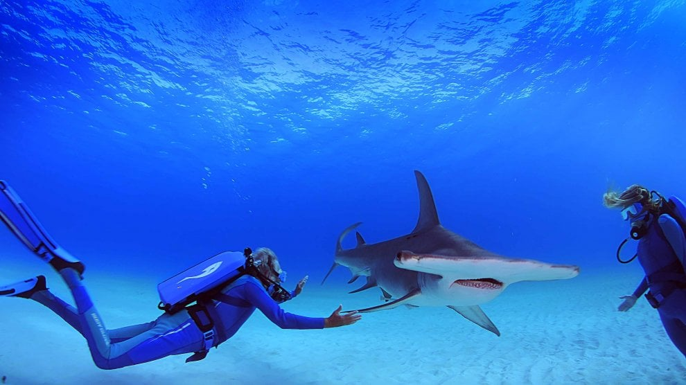 'Le meraviglie del mare' raccontate dall'esploratore erede del grande Cousteau
