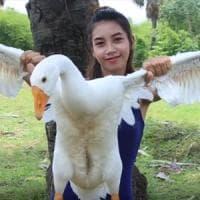 Facevano i 'survivalist' mangiando animali protetti: fermati gli youtuber cambogiani da...