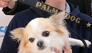 Tra cinofilia e cinefilia: il cast canino di 'Dogman' vince il premio Palm Dog
