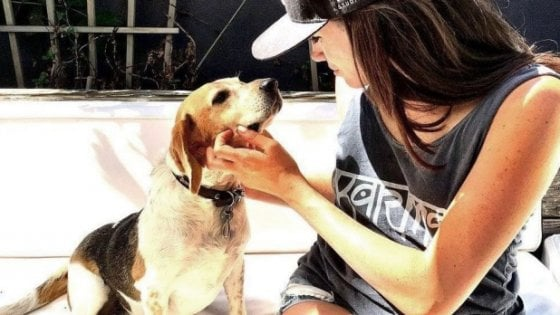 Dal canile alla Famiglia Reale: la favola di Guy, il beagle trovatello di Meghan Markle