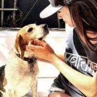 Dal canile alla Famiglia Reale: la favola di Guy, il beagle trovatello di