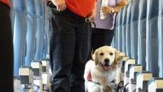 Pet therapy in volo, la stretta di American Airlines: No a ragni, capre e pavoni. A rischio la sicurezza