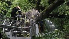 Firenze, crolla un albero su un bus turistico: quattordici feriti