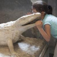Alla scoperta degli occhi del coccodrillo