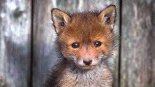 La tenerezza in uno scatto: le foto celebrano gli animali selvatici