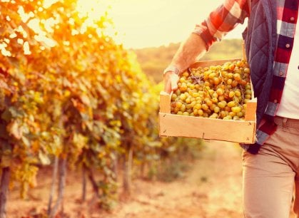 Turismo del vino in festa: torna Cantine Aperte