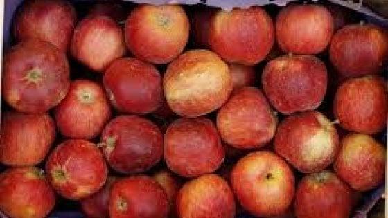 Risultati immagini per pesticidi frutta