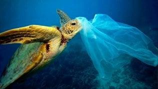 Una rete per i pesci e una per la plastica: la missione quotidiana di 5mila pescatori del Kerala