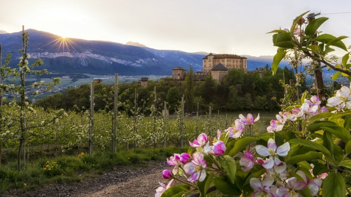 Fiori Da Giardino In Montagna trentino. il bello delle fioriture di montagna - la repubblica
