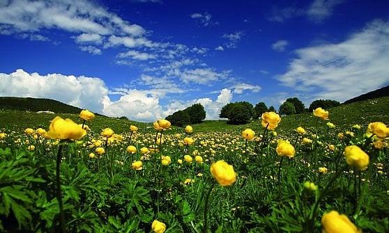 Trentino. Il bello delle fioriture di montagna