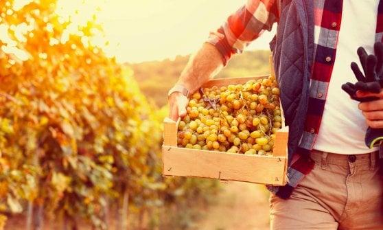 Prosecco, occhi puntati sulla questione pesticidi