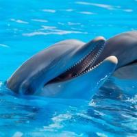 I delfini sono felici ovunque?
