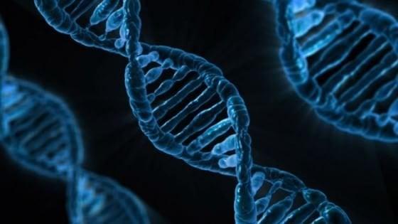 """Alcuni geni """"sopravvivono"""" alla morte, parte del Dna continua a funzionare"""