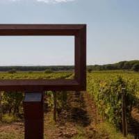 Le Macchiole, e l'incredibile forza della verità del vino