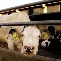 ''Via carne e latticini per ridurre l'impatto sull'ambiente''