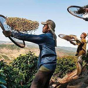 Povertà e cambiamenti climatici, sotto scacco la produzione di tè e caffè