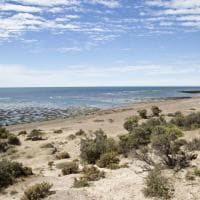 Argentina. Desolata e splendida: Penisola Valdés