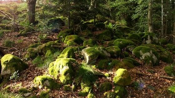 """L'inquinamento colpisce alle radici. """"Malati i funghi che nutrono gli alberi"""""""