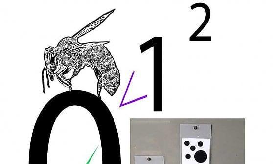 Sorpresa: anche le api conoscono lo zero
