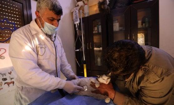 Siria, una clinica per gatti nella provincia martoriata dalla guerra