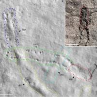 Le tracce fossili delle orme più antiche