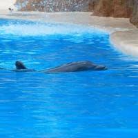 I delfini si danno dei