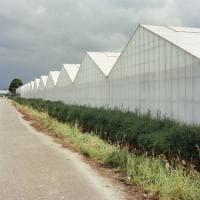 'Invernados', Gaia Cambiaggi indaga le trasformazioni del sistema di produzione agroalimentare