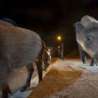 I mammiferi hanno paura di noi: ecco perché diventano notturni