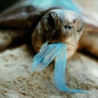 Wwf, sos tartarughe: salviamole dalla plastica