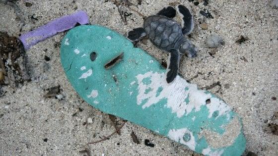 Giornata mondiale delle tartarughe. Il Wwf: salviamole dalla plastica