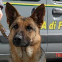 Il cane Caboto salva i suoi simili maltrattati