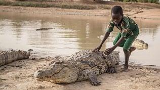 Vacanze a dorso di coccodrillo.Nel Burkina Faso c'è un villaggiodove è sacro (e amichevole)