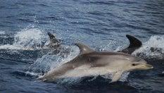 Benvenuti all'isola d'Elba. C'è il paradiso dei delfini