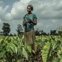 """Agricoltura, non solo sfruttamento dei braccianti: un'indagine sulle """"buone pratiche"""""""