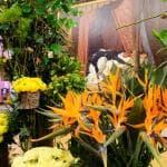 Italiani distratti, per piante e fiori i produttori si attaccano all'export