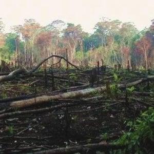 """Congo, la deforestazione selvaggia che nessuno punisce: le """"distrazioni"""" di un potere corrotto"""