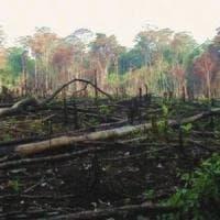 Congo, la deforestazione selvaggia che nessuno punisce: le