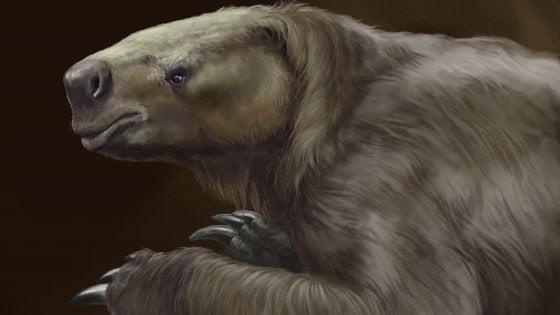 L'antenato del bradipo non era così lento