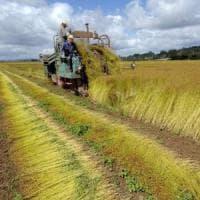 Agricoltura, l'Italia rischia di restituire 550 milioni di fondi Ue