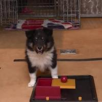 I cuccioli di cane imparano (anche) dagli esseri umani