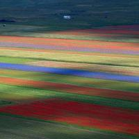 A Castelluccio di Norcia è tornata la Fioritura. Giallo, rosso, blu: una tavolozza di...