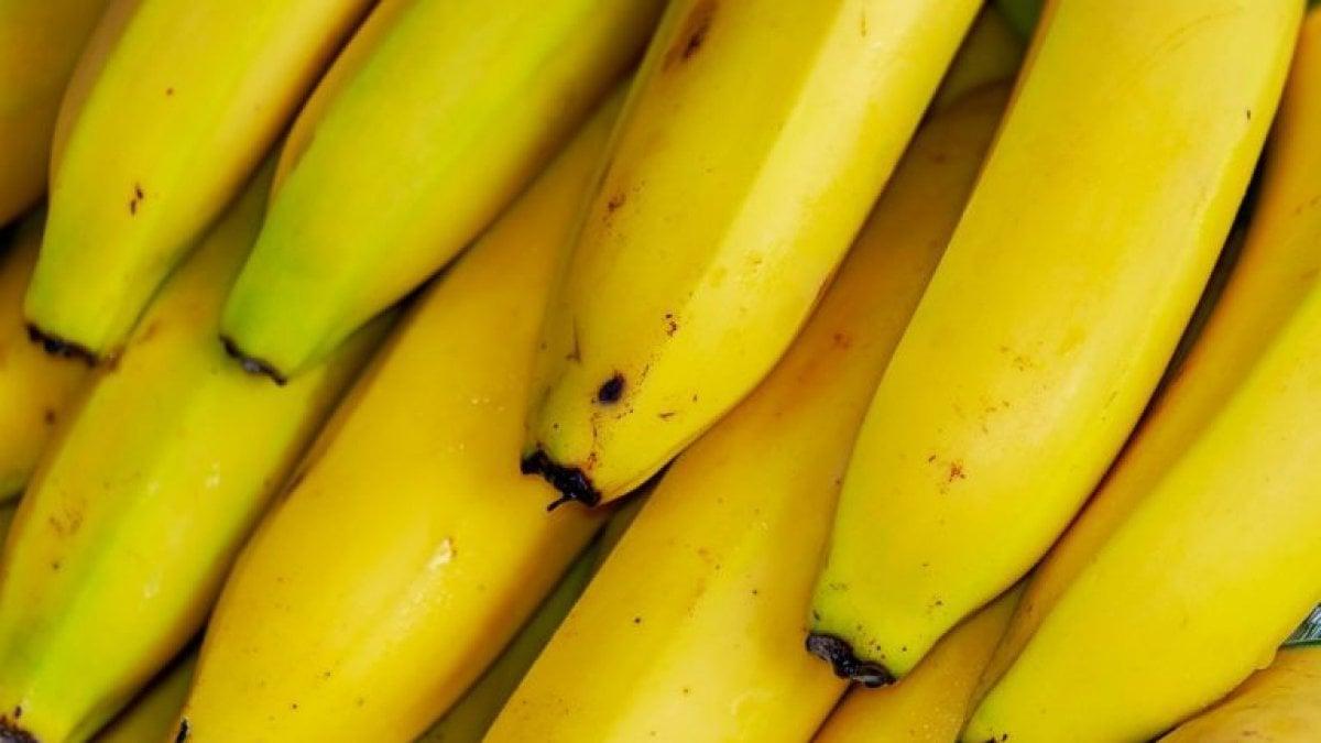 Pianta Di Banana Foto un mondo senza banane: il frutto rischia l'estinzione - la