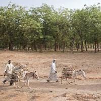 L'assalto alle foreste minaccia oltre un miliardo di persone